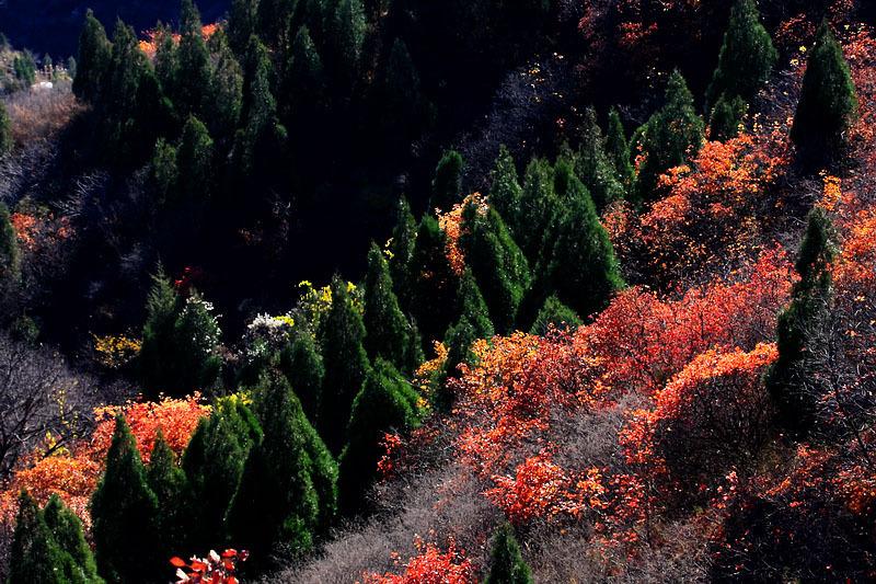 公园主要景区有红叶岭风景区,青龙谷风景区,丁香谷风景区,石峡风景区